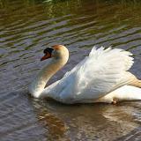 Vogels en dieren - IMG_6297.JPG