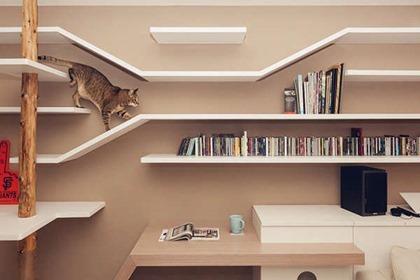 cat-friendly-living-room