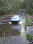 """Blue Wombat bei seiner ersten """"Fluss""""überquerung"""