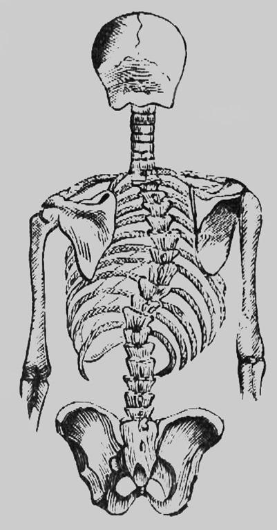 [deformed+spine%5B4%5D]