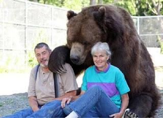manusia yang hidup rukun dengan beruang