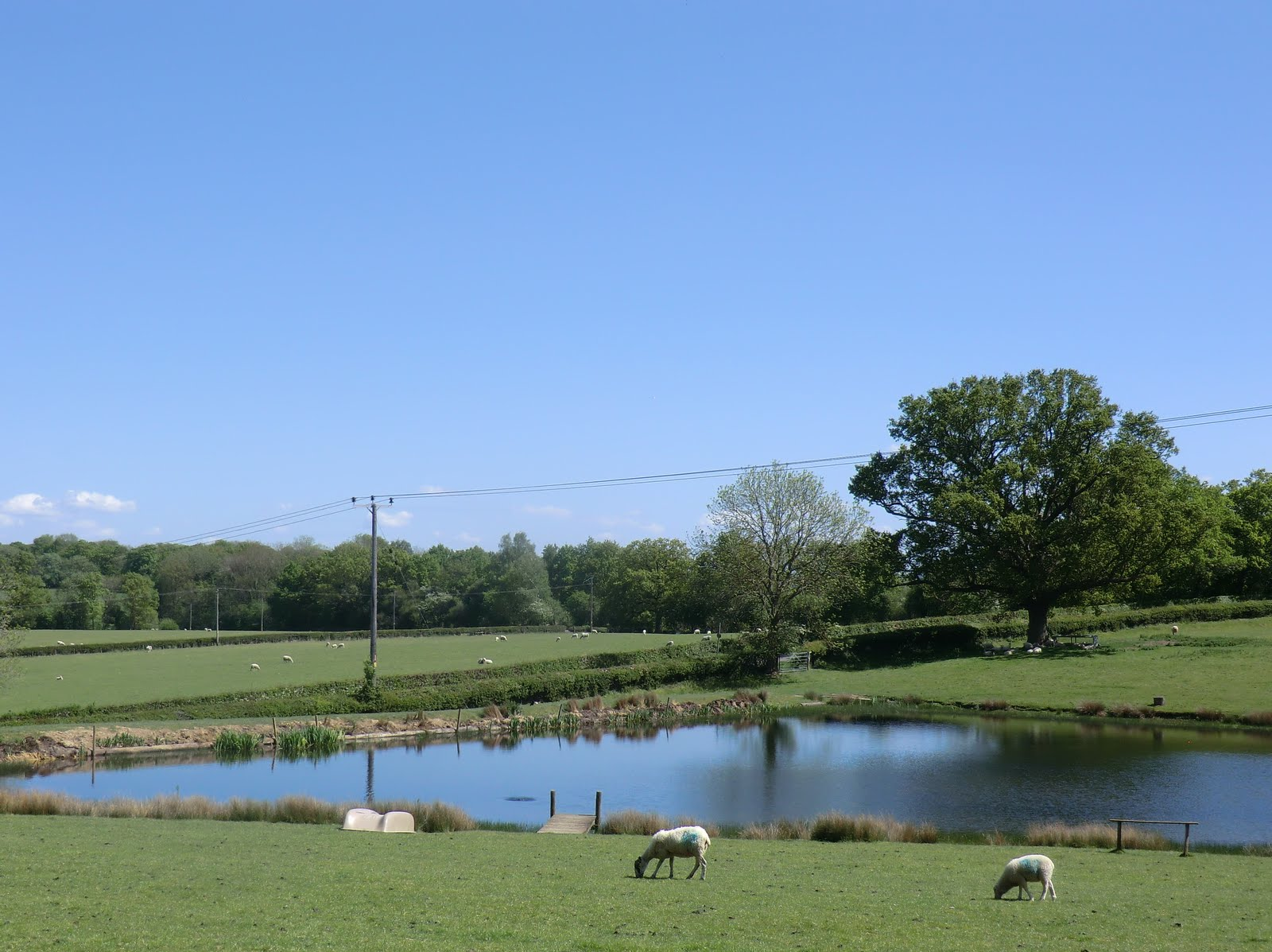 CIMG8111 Pond at Partridge Farm