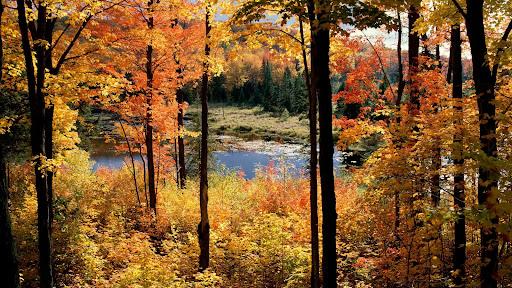Lac Fortune, Gatineau Park, Quebec, Canada.jpg