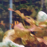 Fish - 116_0198.JPG