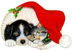 cat_dog_hat
