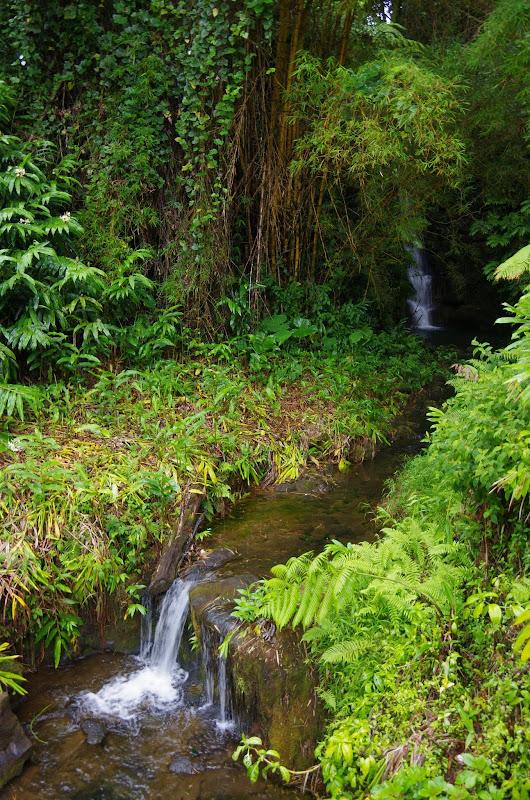 06-23-13 Big Island Waterfalls, Travel to Kauai - IMGP8884.JPG