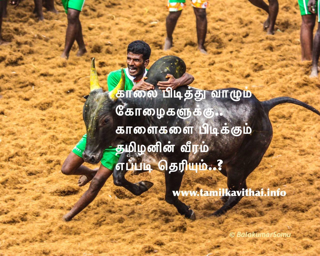 Tamil Kavithai Pongal Jallikattu Kaalai Image With Kavithai Lines