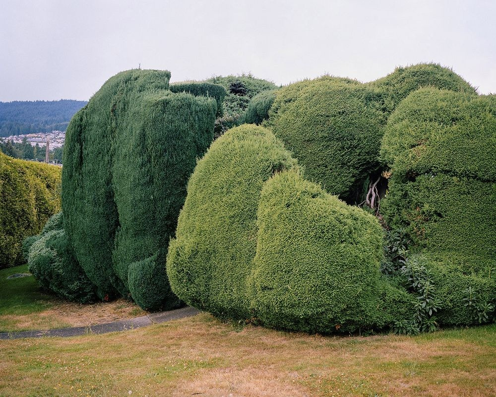 marc-alcock-topiary-1