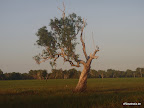 Gans auf Baum