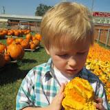 Pumpkin Patch 2015 - 12068638_10153209195112404_990653312683176892_o.jpg