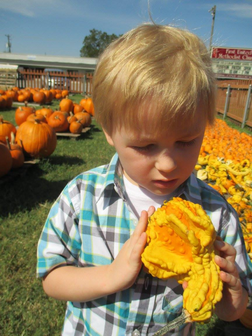 Pumpkin Patch 2015 - 12068638_10153209195112404_990653312683176892_o.jpg