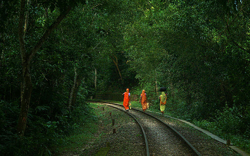Rail line at Lawachara National Park