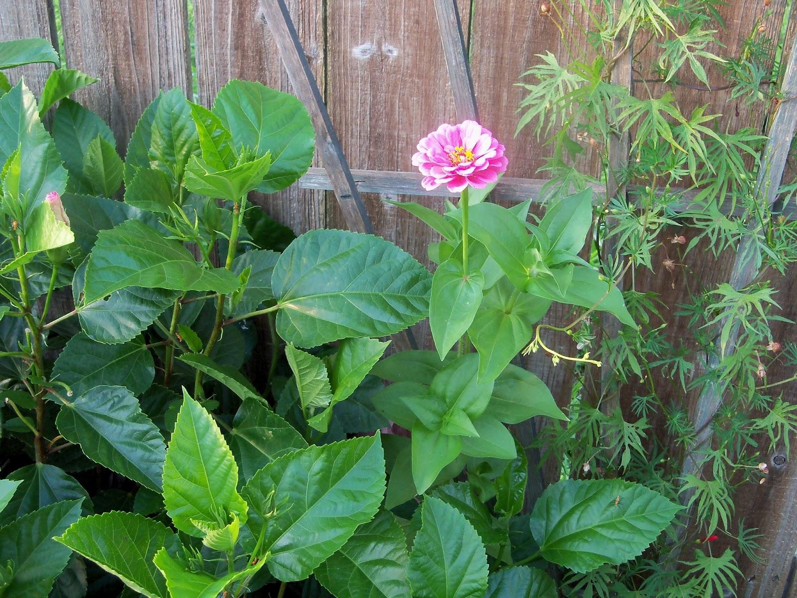 Gardening 2012 - 115_2393.JPG