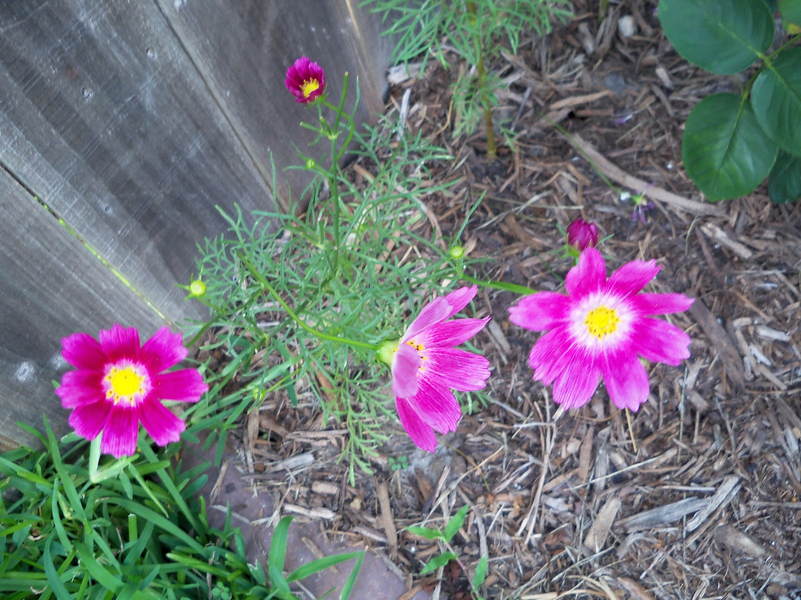 Gardening 2010, Part Two - 101_2491.JPG