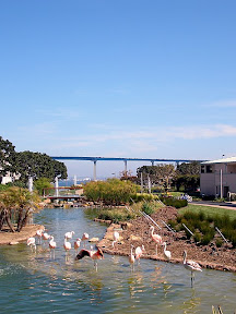 Glimpse of the Coronado bridge behind the flamingos