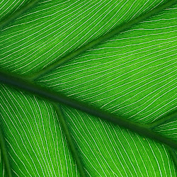 Green Leaf Vietnamese Restaurant's profile photo