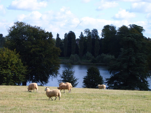 blenheim palace lake sheep