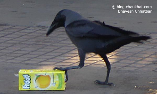 Photographs of a Crow Holding a Soft Drink Pack