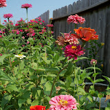 Gardening 2011 - 100_9371.JPG