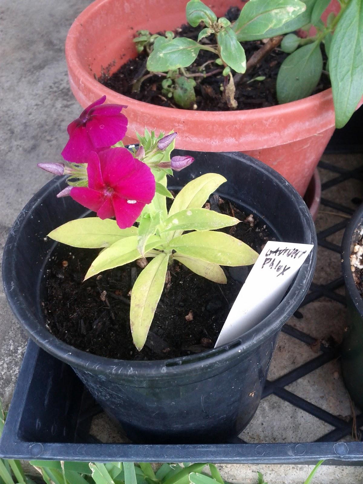 Gardening 2012 - IMG_20120520_174030.jpg