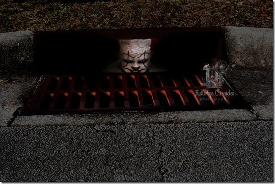 Pennywise (Bub) in drain (copyright Jenny Bell @ Flutterbye Chronicles)