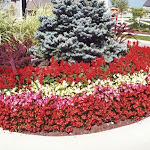 images-Seasonal Color-flowers_13.jpg