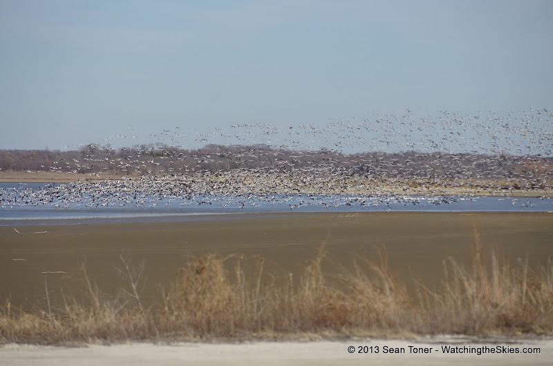 01-19-13 Hagerman Wildlife Preserve and Denison Dam - IMGP4100.JPG