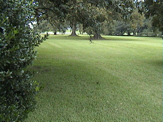 1650A_Southern_Mansion_Garden_-_New_Orleans