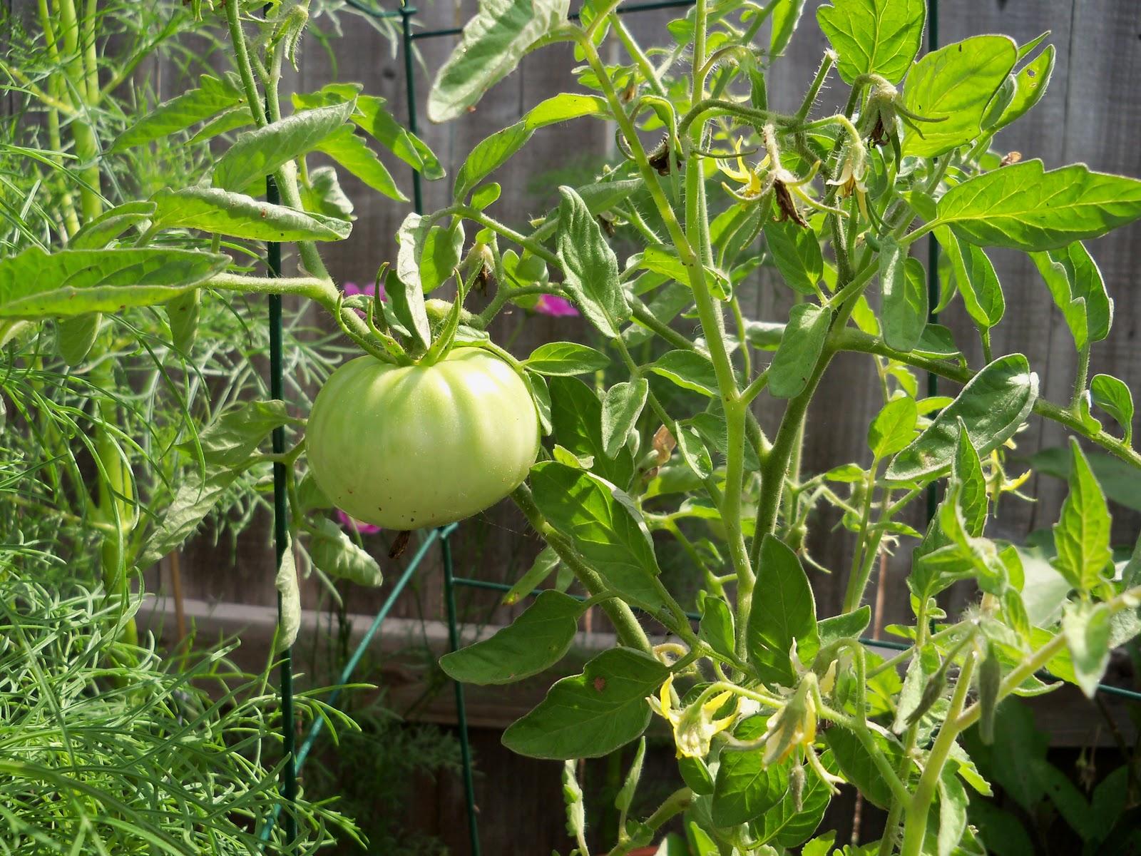 Gardening 2010, Part Two - 101_2714.JPG