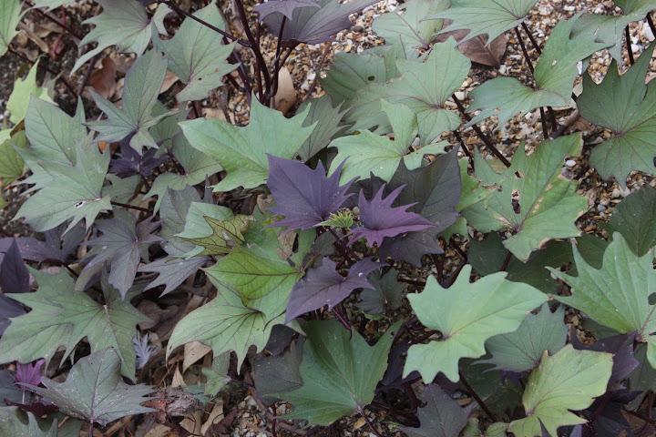Concours : Les  plantes font tapis IMG_6944