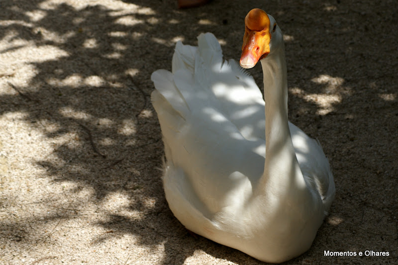 O cabeçudo, Jardim Zoológico de Lisboa