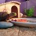 Thực đơn ăn uống đủ chất cho rùa Núi vàng size baby đến trưởng thành
