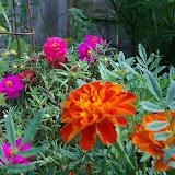 Gardening 2010, Part Three - 101_3708.JPG