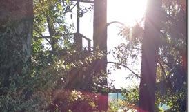 Ein Sparziergang durch den Garten