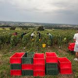 2013 vendanges du chardonnay - 2013%2B09%2B28%2BGuimbelot%2Bvendanges%2Bdu%2BChardonnay%2B111.jpg