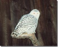 owl015