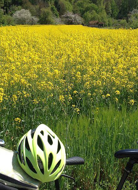 Rapsfeld mit gelbem Fahrradhelm