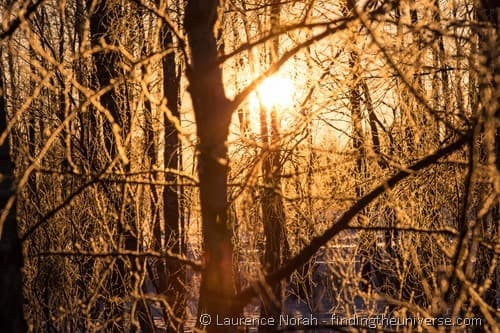 golden light through frozen trees