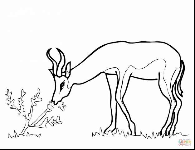 Stunning South African Animal Coloring Pages With Africa Coloring Pages And  Ancient Africa Coloring Pages
