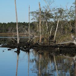 Fowl Marsh from Boat Feb3 2013 048