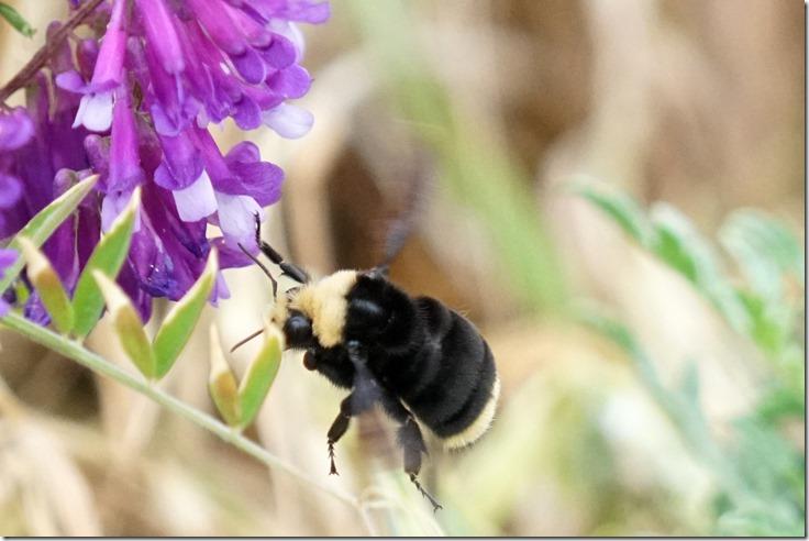 lopez bummble bee 060718 00000