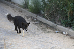 Other Ways We Help - Vet and Sterilizations March and April 2011