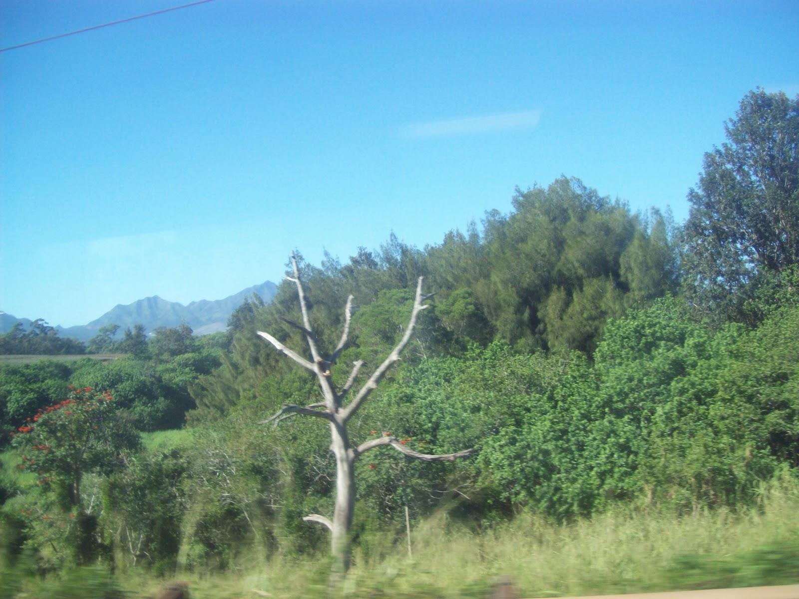 Hawaii Day 3 - 100_7012.JPG