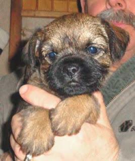 A darling Stevie / Mardi pup