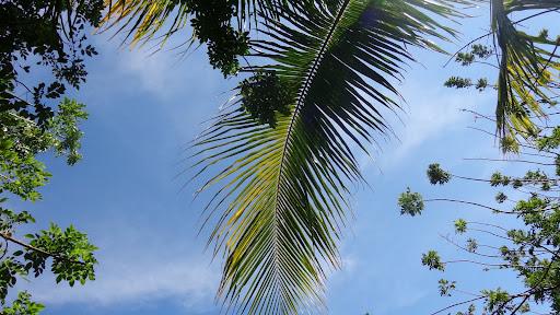 Набире Новая Гвинея