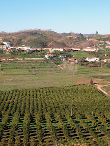 An orchard in the hills of the Algarve