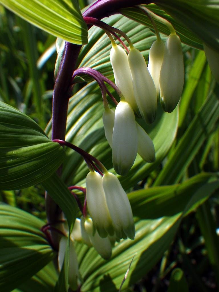 花数2~3個の花
