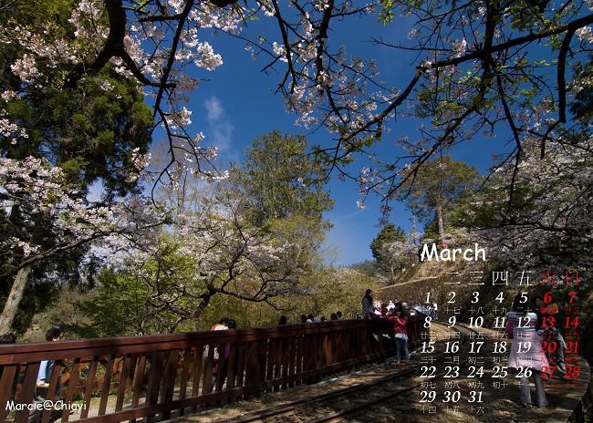 diy 月曆 阿里山 櫻 三月