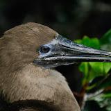 galapagos - Galapagos_FB_2-83.jpg