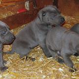 Bluebelle & Cobys 4/19/10 litter - IMG_0785.JPG